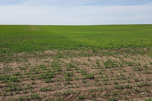 unseen herbicide stress